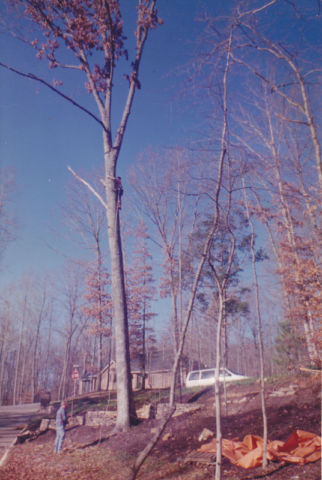 Busy Beavers Tree Service – Affordable Tree Cutting